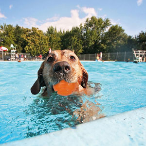 Dog in pool playing with HydroSqueeze ball HydroFreeze range of dog toys