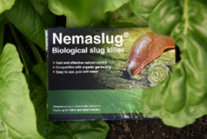 Tackle spring pests with Nemaslug