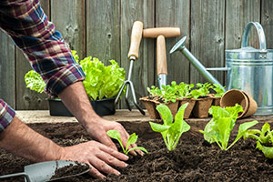 Exercise to Grow your Garden