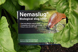 BASF Nemaslug control solution