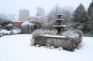 Winter garden - Preparing your Garden for Spring, in Winter