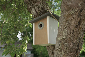 Henry Bell new nest box for national nest box week