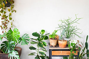 Houseplant sales increase in 2019