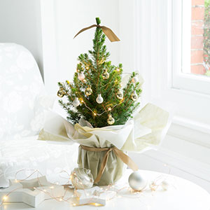 The Mini Christmas tree from BlossomingGifts