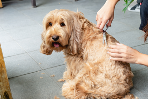 Dog having grooming treatment