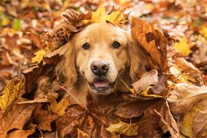 Happy dog in leaves